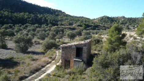 Gran olivar con masía típica en Maella.
